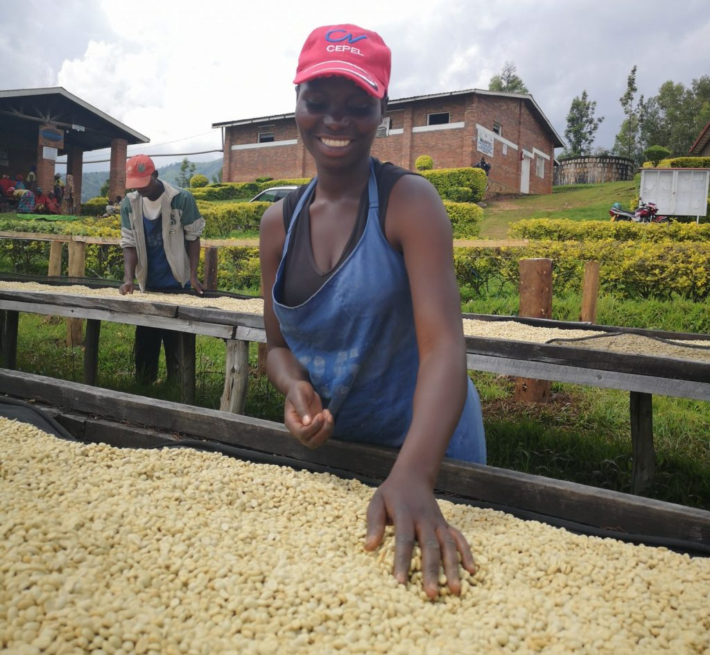 worker on coffee plantation